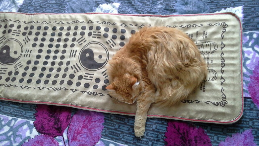 котик и коврик